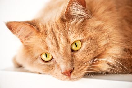 Katzenfutter für alte Katzen
