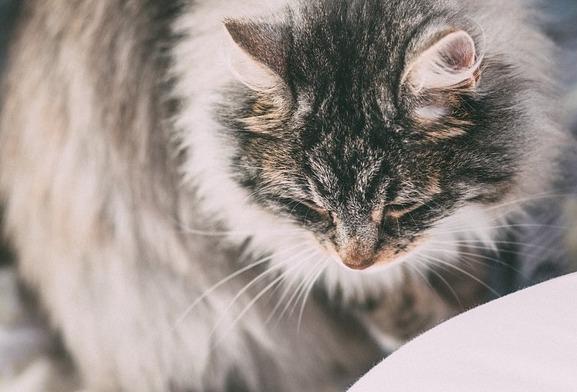 katzenfutter-allergie-symptome