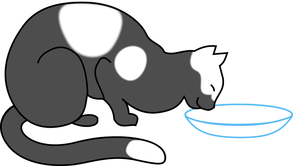was-fressen-katzen