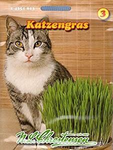 katzengras-kauf-saatmischung
