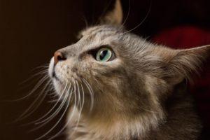 Wurmkur Katze Test Die Besten Wurmkuren 2020