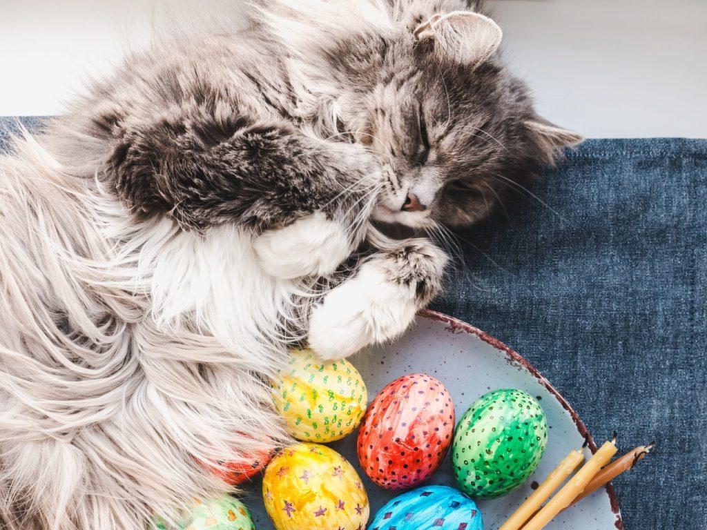 Katzen Eier